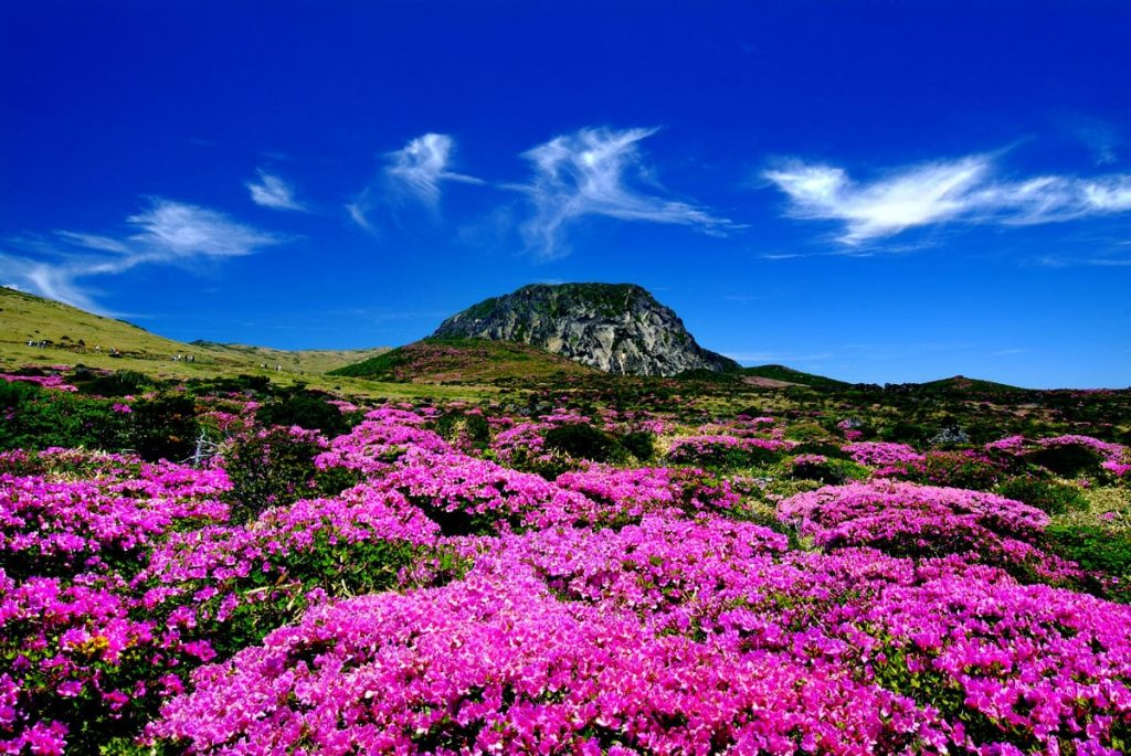 korean travels purple hills